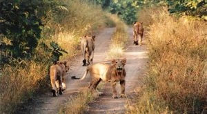 Wildlife tour Gujarat