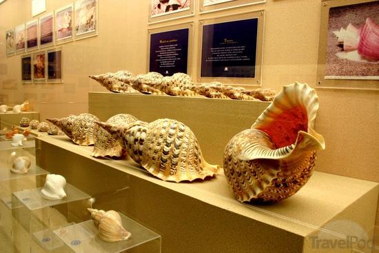 Sea Shells Museum